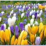 Каква грижи да положим за цветята през март