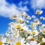 Какво трябва да знаем, когато купуваме цветя