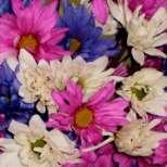 Как да се грижим за цветята през зимата