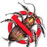 Как да се преборим с домашните молци и хлебарки
