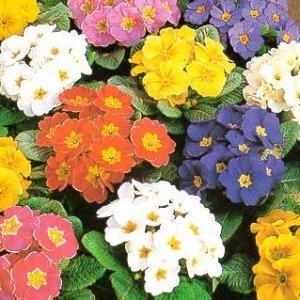 Можем ли да се лекуваме с цветя