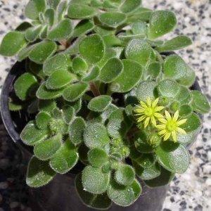 Каква е формата на стайните растения