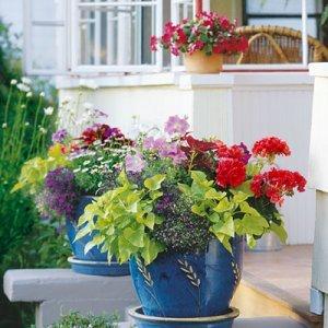 Няколко бързи хитринки за вашите домашни цветя