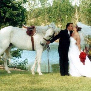 Принцът на белия кон броди наоколо-намерете го!