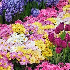 Как се засаждат пролетни цветя