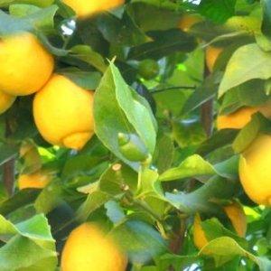 Бързи начини за разкрасяване на лицето с лимон
