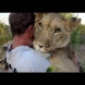 Връзката между двама мъже и лъвицата, която се гали като домашно коте-Видео