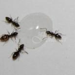 Най-добрите начини да се справим с досадните мравки