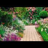 Правилни грижи за розите и другите цветя в градината през юли-Пресаждане и борба с маната