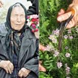 Рецептите на Баба Ванга за лечение с билки на Акне, Астма, Артрит