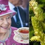 Българската билка, която достигна до английската кралица Елизабет