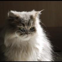 Котката ви много ще ви се обиди, ако правите тези неща с нея