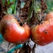 5 рецепти, които ще ви помогнат да се справите с опасна болест по доматите