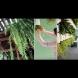Как да си направим оригинални висящи окачени саксии- създайте чудо в дома си (снимки)