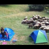 И това е възможно днес! Детски лагер без Wi-Fi  и телефони! Вижте как са си прекарали децата!