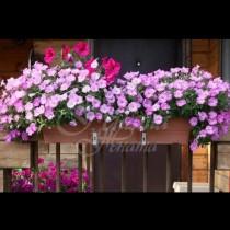Лечебните и отровните цветя у дома