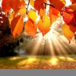 Прогноза по дни. Георги Рачев обяви прогнозата за времето през месец октомври