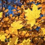 Подробна прогноза за времето по дни през целия октомври-Около Петковден ще бъде зле положението