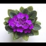 Любов и щастие ще царят в дома ви, ако си вземете от тези стайни цветя