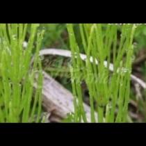 Чудо-трева дава нов живот на косата ми-Мислим я за плевел, а то какви ползи има само от нея!