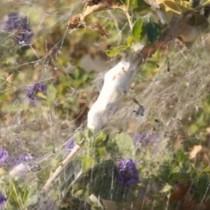 Гигантски паяци обвиха цял гръцки остров в паяжини
