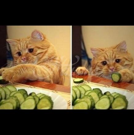 Котките с различни цветове предпазват от различни проблеми-Черна котка-финансов успех, Рижава котка -любов