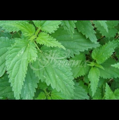 Растението, което чести отровите от тялото перфектно, а всички го подценяват, защото не са наясно с неговата мощ