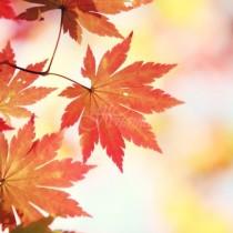 Седмична прогноза за времето за периода от 5 до 11 ноември