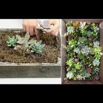 Да засадиш картина - манията, която създава произведения на изкуството. Как се прави - пълно ръководство (снимки):