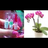 Витаминен коктейл за орхидеи - бърза реанимация за отчайващи случаи. За пищен цвят и здрави листа: