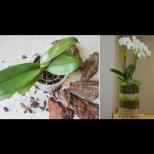 11 идеи, които ми даде моята приятелка- градинарка как да засадя и декорирам моите красавици (снимки)