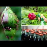 Невероятно, но факт: най-ефективното средство срещу листни въшки е обикновена газирана напитка. Ето как: