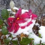 Жълт код за обилен снеговалеж за понеделник-Прогноза за времето до сряда