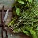 Три билки за пречистване, които са точно за смяната на сезоните и за силен организъм