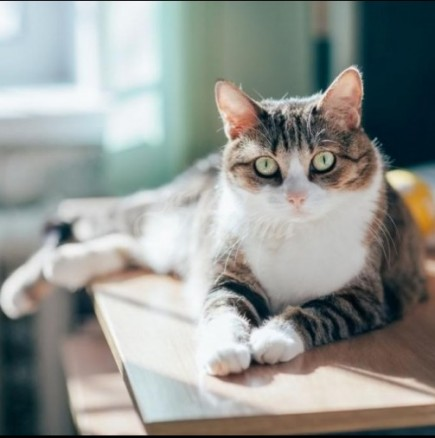 Котката Рокси изчезна от вкъщи и чак след 5 години лутане се прибра сама