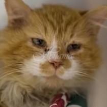 Котка измина 20 км, за да се събере със семейството, което я изостави, но те ето какво направиха