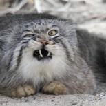 Котка уби крадец и вкара друг в болница