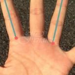 Дължината на показалеца и безименния пръст разкриват много за личността ви