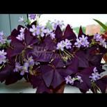 10 красиви стайни растения, които привличат любовта и семейното щастие