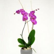 Мощната енергия на орхидеята в дома ви