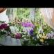 Безценни съвети за всички, които имат орхидеи. Цъфтят през цялата година, первазът ми е станал като цъфтяща градина /СНИМКИ/