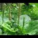 Ето я българската билка, която помага за толкова много болежки