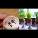 13 страхотни идеи за какво да използвате черупките от яйца (снимки)