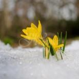 Месечен хороскоп за март 2019-Водолей-Животът им най-накрая ще се обърне през март, Стрелец благоприятен месец