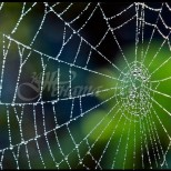 Ако видите паяк в къщи, не го убивайте в никакъв случай!