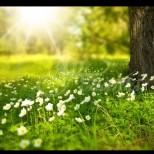 Първа пролет настъпва ведно с магична нощ довечера!