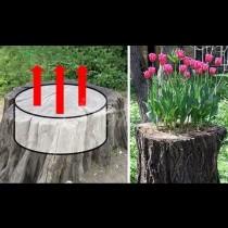 16 свежи идеи как да превърнем изгнилия пън в двора в красива цветна фантазия (Снимки):