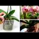 Безценните правила, които да следвате за орхидеята Фаленопсис /СНИМКИ/