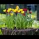 16 свежи идеи за градинка в стария пън