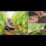 Кисело мляко, захар, сол и чесън - новите оръжия на градинаря. 5 супер рецепти за богат урожай без химия: